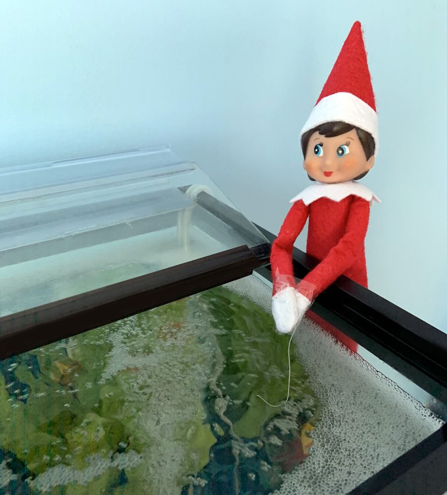 what to do if your kid catches you moving the elf on the shelf