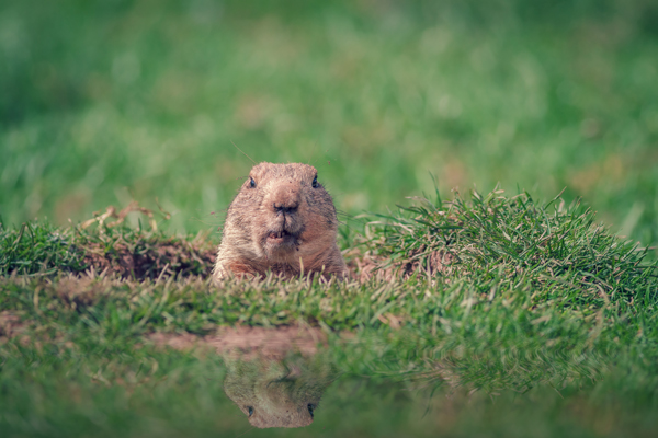 How To Teach Your Child About Groundhog's Day