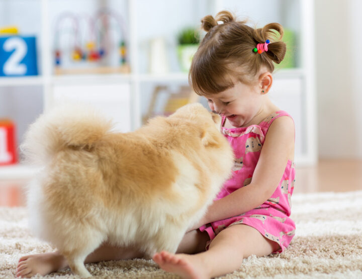 How to Create Harmony Between Your Toddler And Your Pet