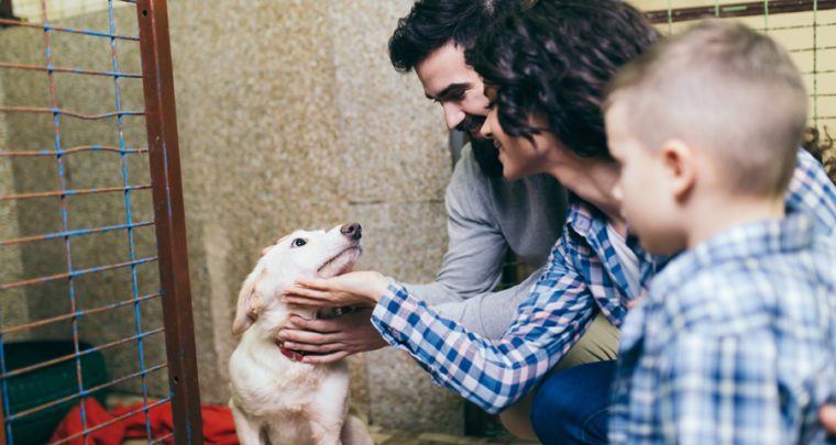 Should You Adopt A Pet During The Pandemic? Pet Experts Weigh In