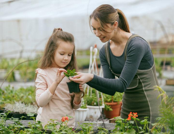 6 Ways To Garden During The Winter Months