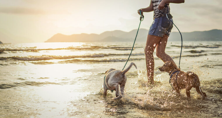 These Pet Wellness Tips Will Have Your Dog's Tail Wagging